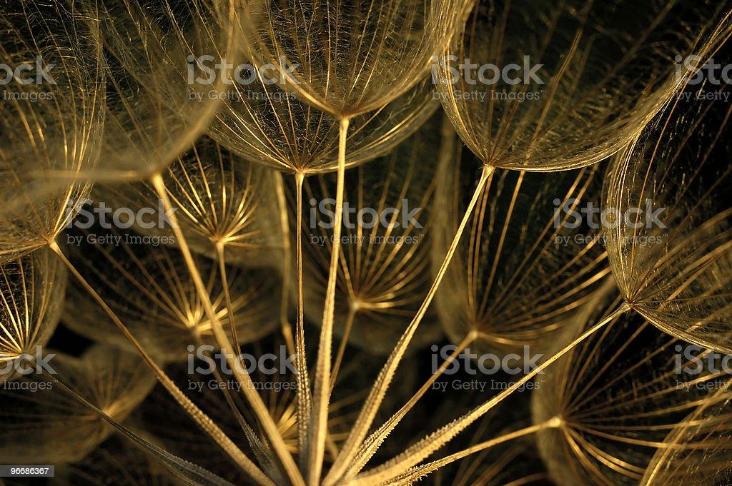 Dry wildflower royalty-free stock photo