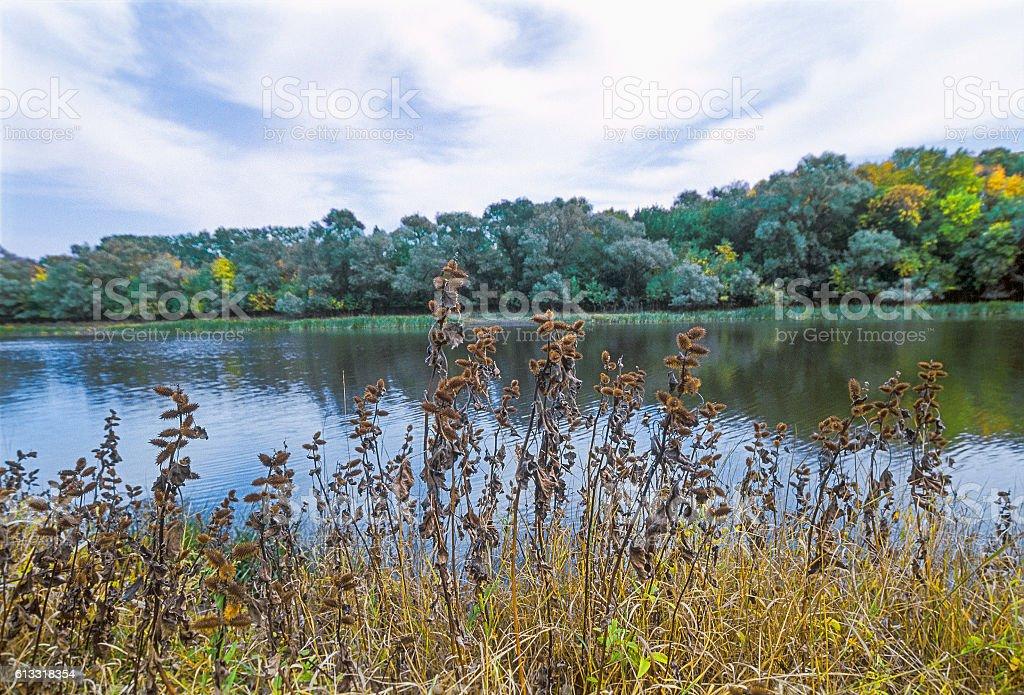 Dry xanthium, river, Autumn. Astrakhan region. Russia stock photo