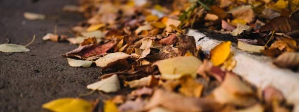 Dry yellow autumn leaves lies on asphalt sidewalk beautiful city of picture id1166463802?b=1&k=6&m=1166463802&s=612x612&w=0&h=w8ix6k8k0pzksv16l45qcrbvjfmz3xuwtnwlwuiloby=