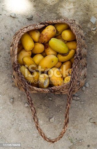 978314900 istock photo Dry Yellow Brown Fresh Dates Sweet Fruit Ramadan Kareem Food In ripen process in leaf box 1223876659