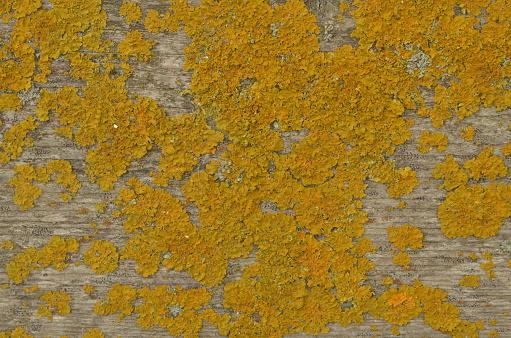 Dry Yellow Moss On Wooden Board - zdjęcia stockowe i więcej obrazów Abstrakcja