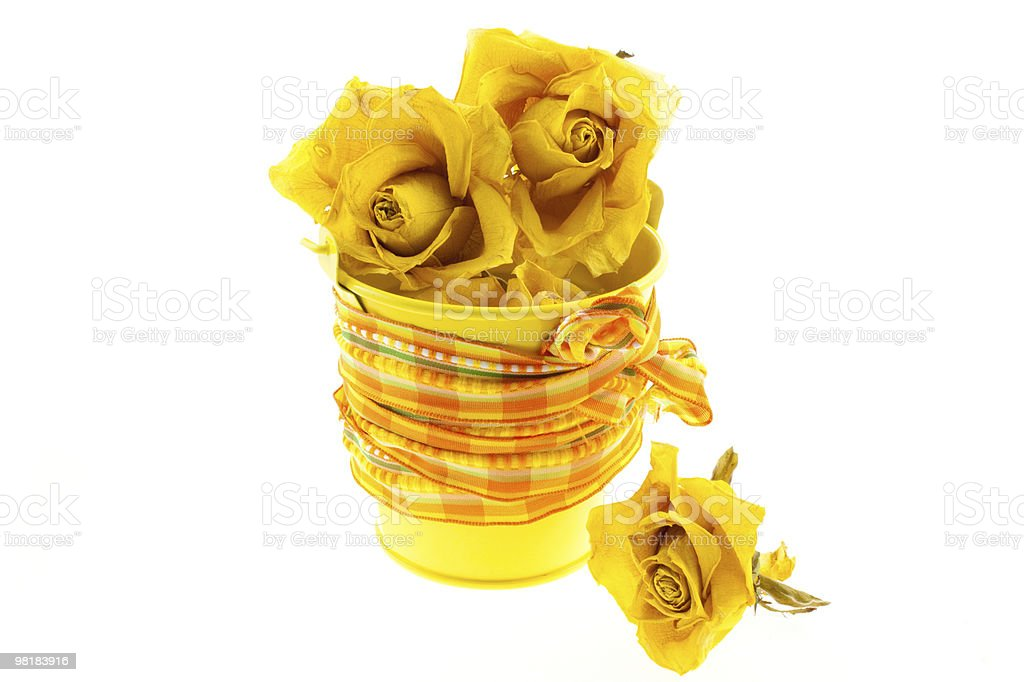 dry yellow roses in bucket with orange ribbon royalty-free stock photo