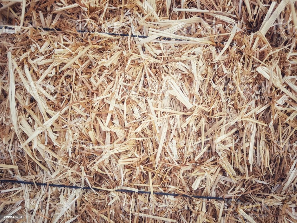 Dry yellow straw grass background texture after havest stock photo
