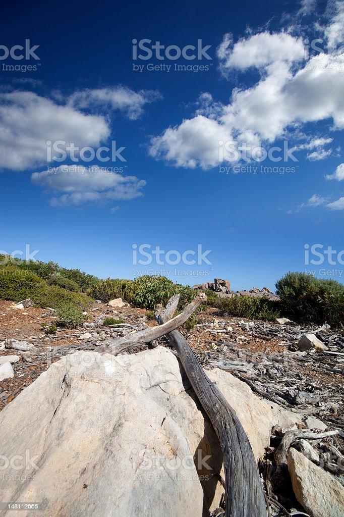 Dry zone in the bush stock photo