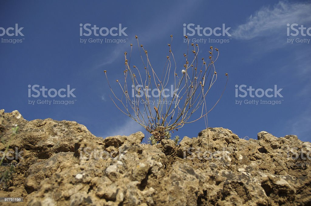 Dryed divisione - foto stock