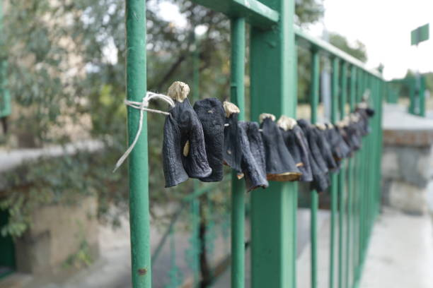 Drying Aubergines