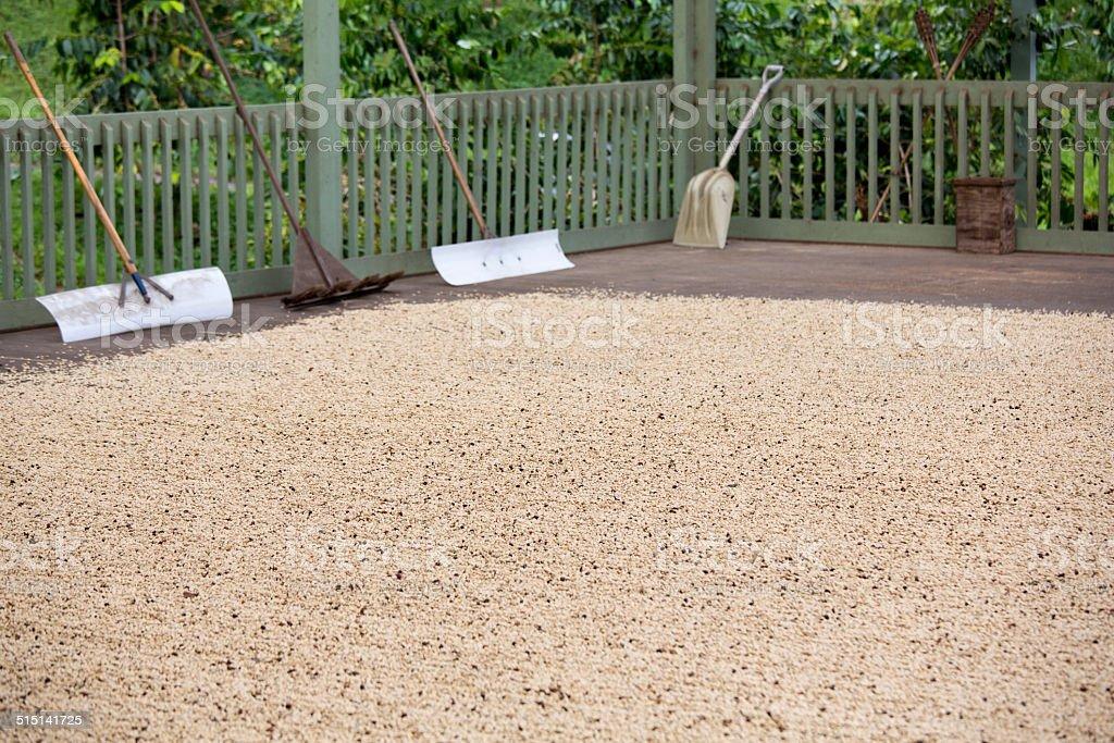 Drying Beans, Kona Coffee Farm Hawaii The Big Island stock photo