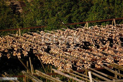 Drying cod fish near A village, Moskenesoya, Lofoten, Norway