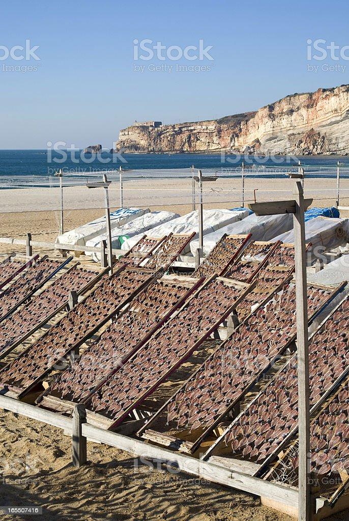 Drying fish royalty-free stock photo