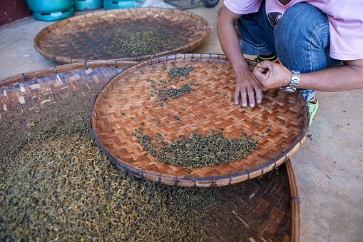 drying green tea in pan processing by hand in motion