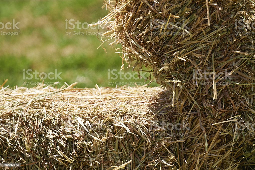 Drying in the sun royalty-free stock photo