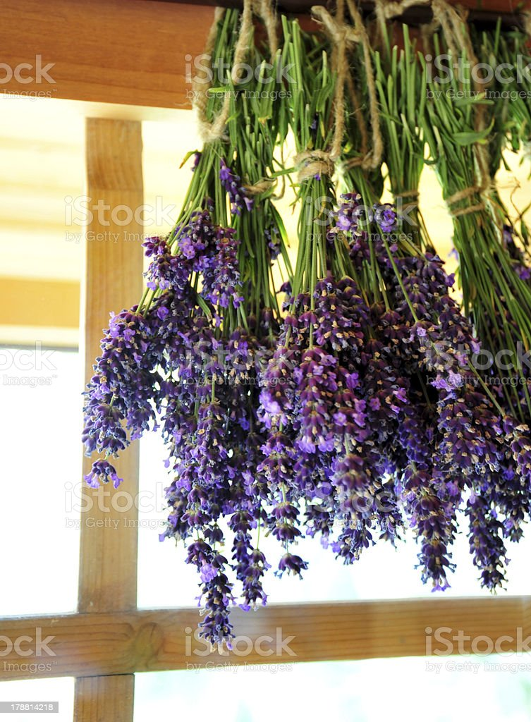 Drying lavender royalty-free stock photo