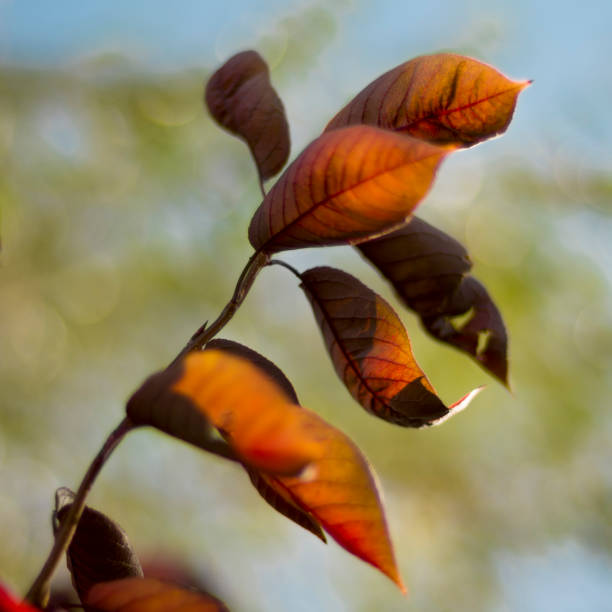 Drying leaves on a branch stock photo