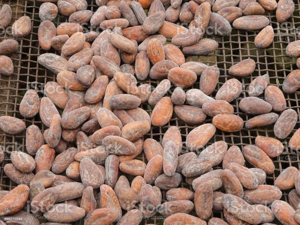Drying of cocoa beans, Sao Tome and Principe, Africa stock photo