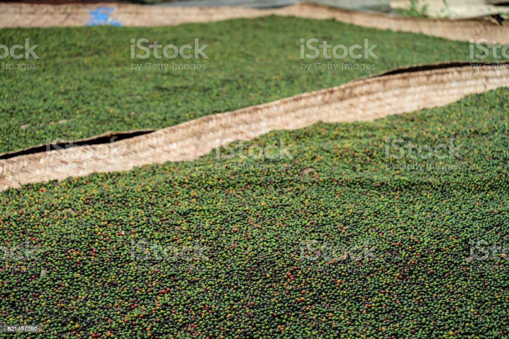 Drying peppercorn stock photo