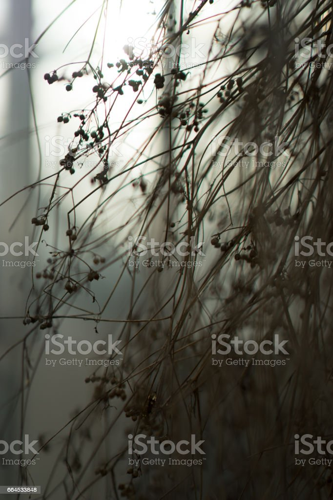 Drying plants royalty-free stock photo