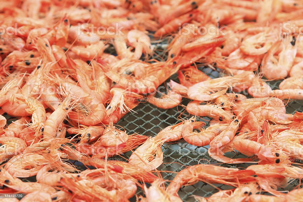 Drying Shrimps royalty-free stock photo