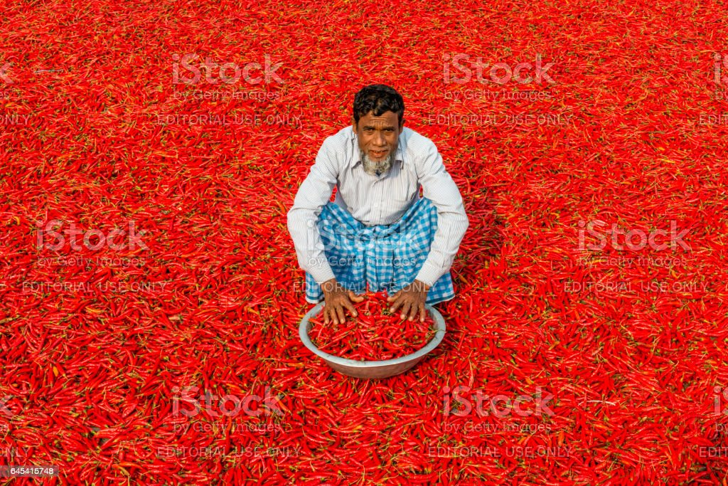 drying the red chillies stock photo
