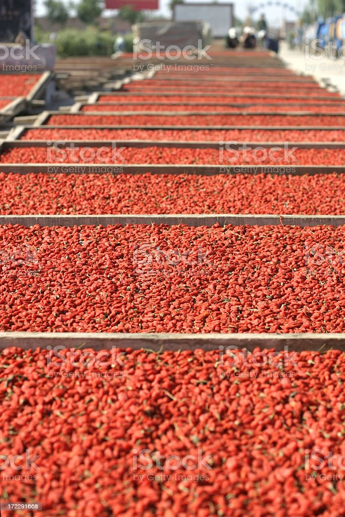 Drying Wolfberries royalty-free stock photo