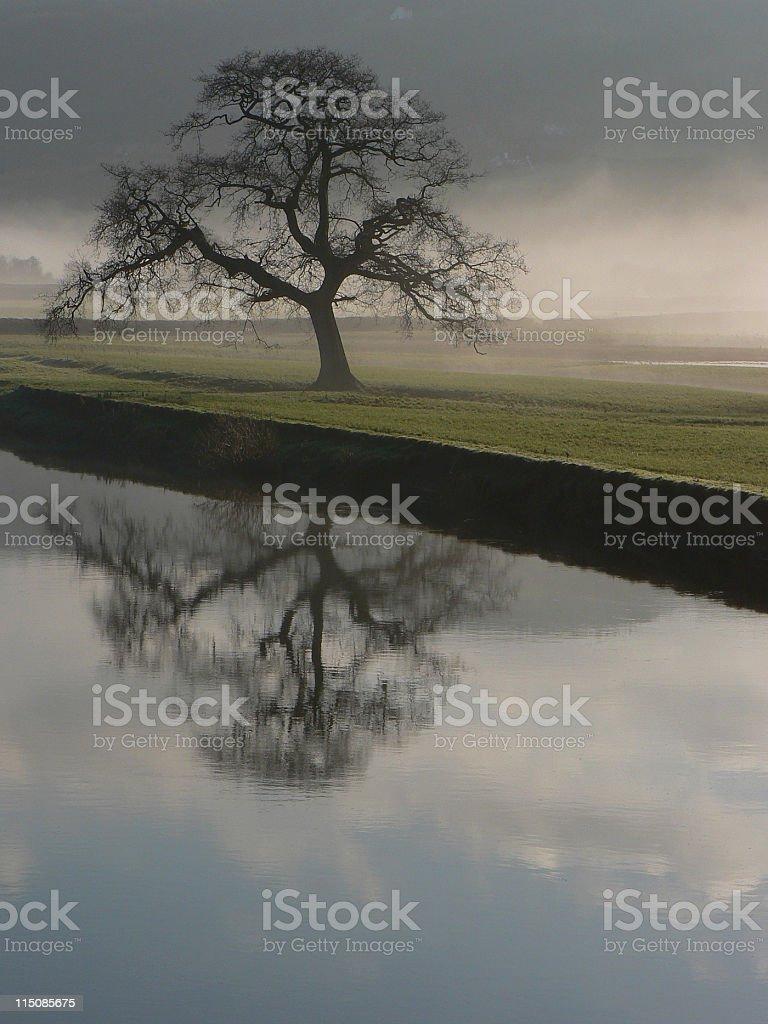 Dryslwyn Oak Singular royalty-free stock photo