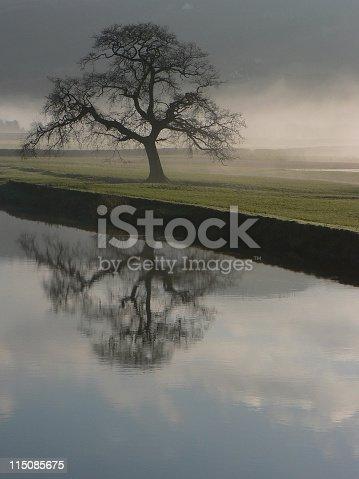 istock Dryslwyn Oak Singular 115085675