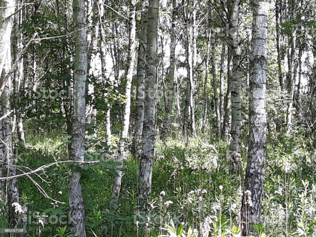 Drzewa royalty-free stock photo