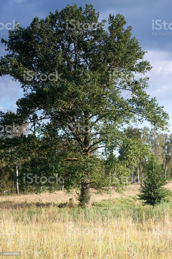 drzewo stock photo