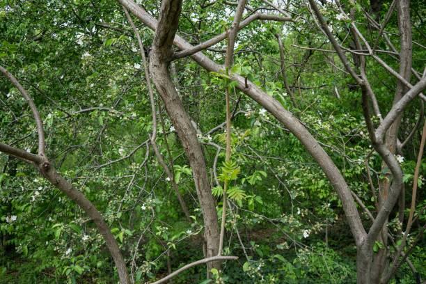 DSC2954a6000 Central Park stock photo