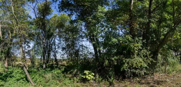 DSC3714a6000a Conservation land in autumn stock photo