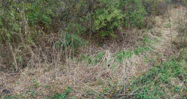 DSC3873a6000 Trees and grasses in wooded area stock photo