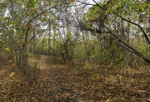 DSC3879a6000a Wooded path in autumn stock photo