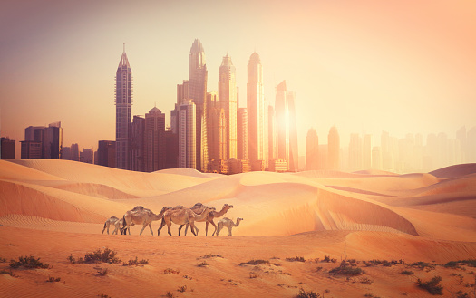 Photomontage of Dubai city in the desert with camels