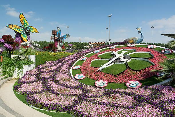 Dubai Miracle Garden is the biggest flower garden, Dubai, UAE. stock photo