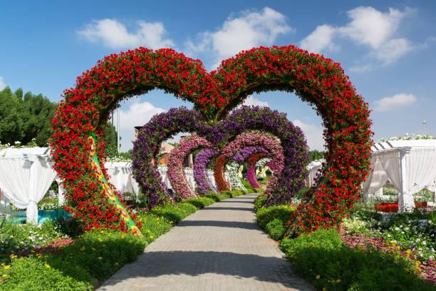 Dubai Miracle Garden, the biggest natural flower garden in the world. stock photo