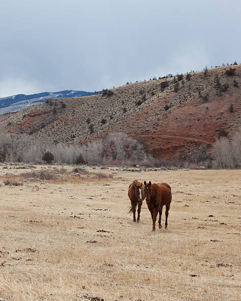 Dubois Wyoming Red landscape horses stock photo