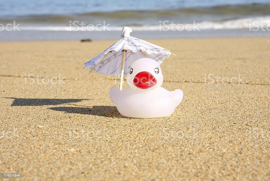 Duck alone on the beach royalty-free stock photo