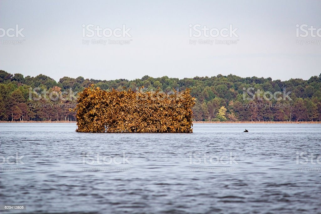 Duck Blind on Reelfoot Lake stock photo