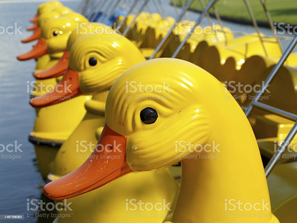 duck boat royalty-free stock photo