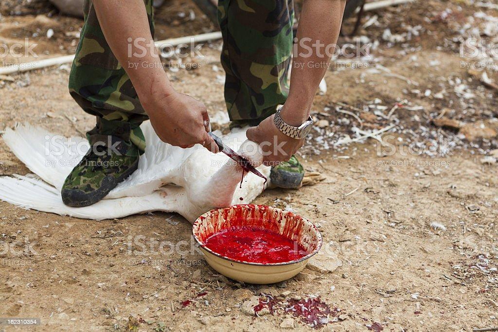 Duck butchering royalty-free stock photo