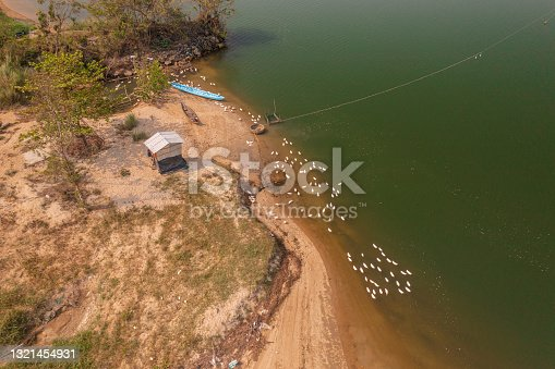 istock A duck farm by the river 1321454931