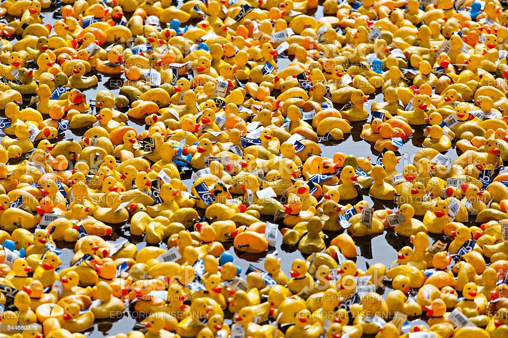 Duck Festival stock photo