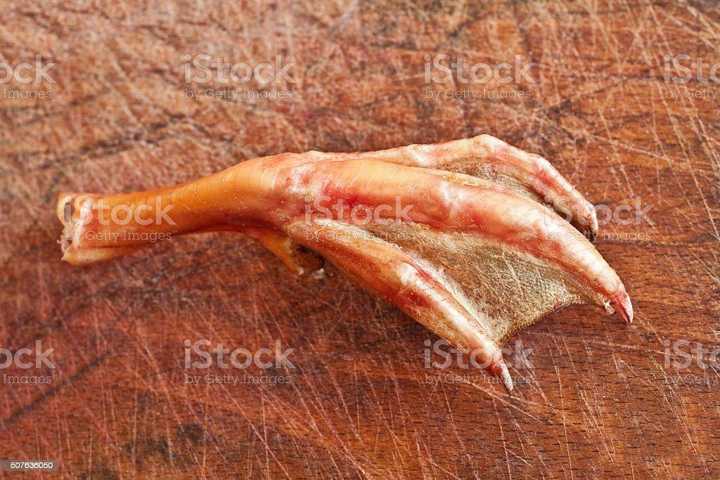 duck foot stock photo