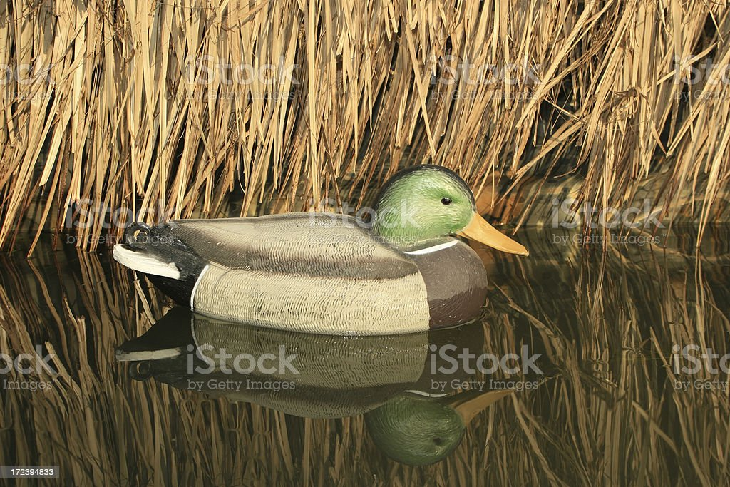 Duck Hunt Series royalty-free stock photo