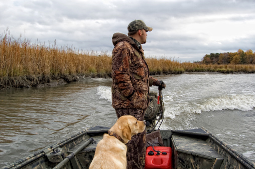 Duck hunting on the river with golden labrador