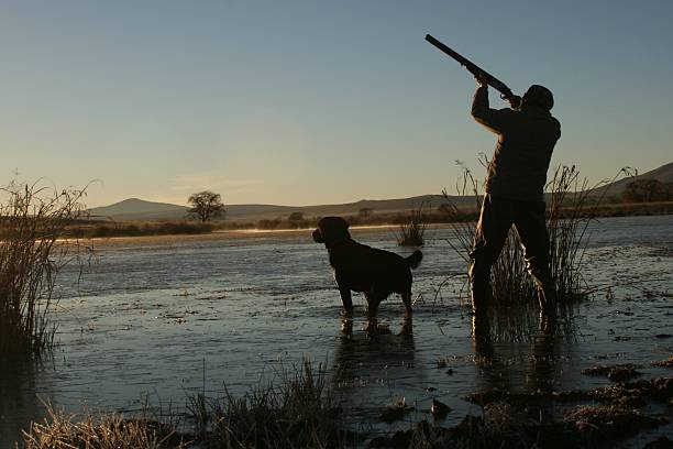 Duck Hunting A duck hunter and his hunting dog. bird hunting stock pictures, royalty-free photos & images