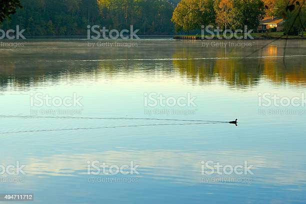 Photo of Duck leaves wake swimming in the lake with reflections