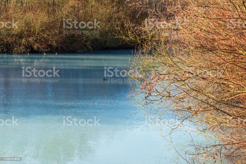 Ente auf einem türkisfarbenen Teich im Winter an einem sonnigen Tag – Foto