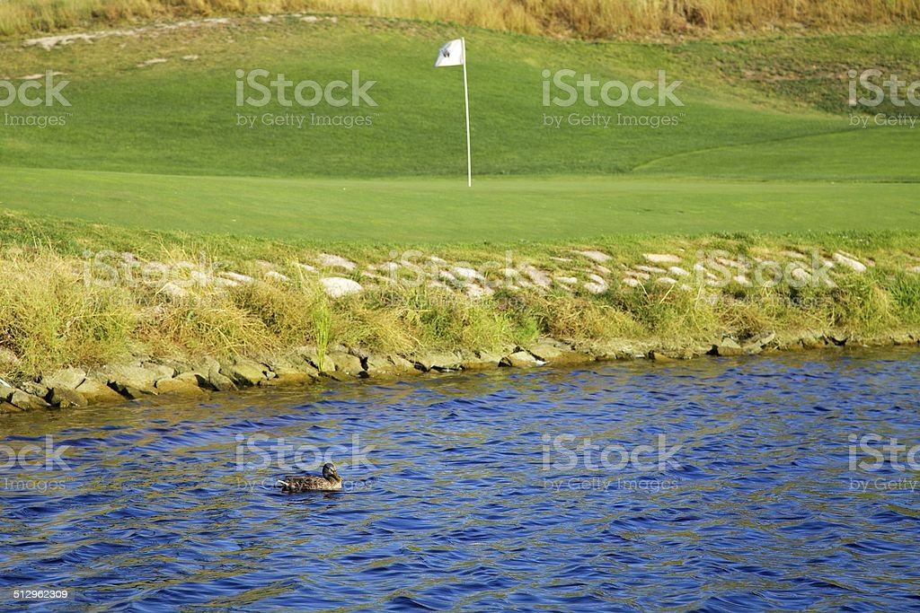 Duck or Flag? stock photo