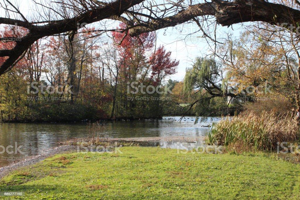 Duck Pond 5 photo libre de droits