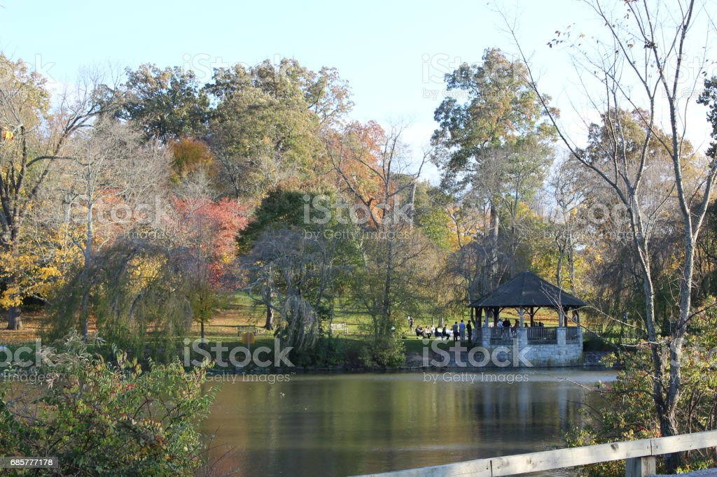 Duck Pond 6 royalty-free stock photo